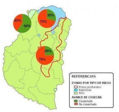 Cosechan el 30 por ciento del arroz sembrado en la provincia