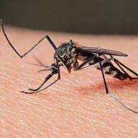 Quilmes: Siete casos sospechosos de dengue, ninguno confirmado