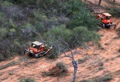 La ley de Bosques redujo las tasas de deforestación en Salta