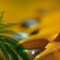 El uso de cannabis medicinal está a un paso de ser ley: aprueban dictamen Aceite de cannabis
