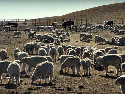 Se reconoció a Santa Cruz la emergencia agropecuaria