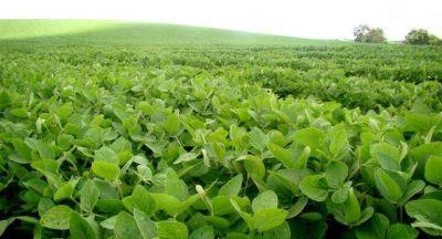 Preocupante: la soja cayó a su menor valor en 12 meses (u$s 344,75)