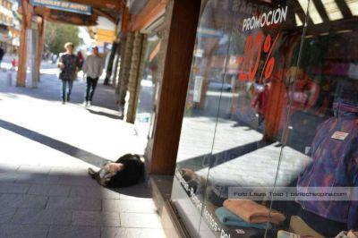 Preocupa la caída del consumo por el