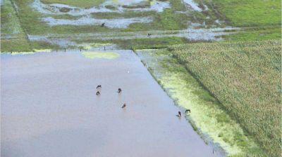 Banco Mundial aprobó u$s 300 millones para obras contra inundaciones