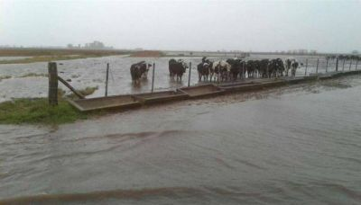 Inundaciones: hay más 1,2 millón de hectáreas afectadas