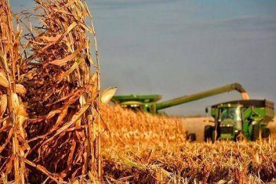 Gualeguaychú es el departamento con mayor área de maíz sembrado en Entre Ríos