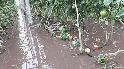 El temporal hizo estragos en el cordón frutihortícola: se perdió el 40% de la cosecha