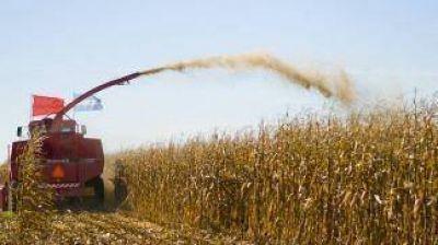 El uso del ferrocarril mejoraría los precios de los granos entre 19% y 27%