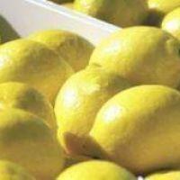 Argentina intentará reactivar las exportaciones de biodiesel y limones en la reunión bilateral entre Macri y Trump