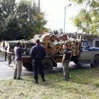 La Municipalidad de Quilmes insta a cuidar el arbolado público y no podar
