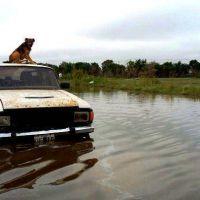 Bajó el agua: son 250 mil las hectáreas inundadas