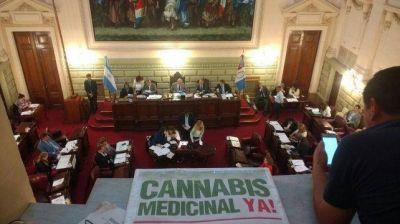 La provincia tendrá un consejo asesor en políticas de cannabis medicinal