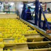 Estados Unidos levantará la restricción a la importación de limones argentinos