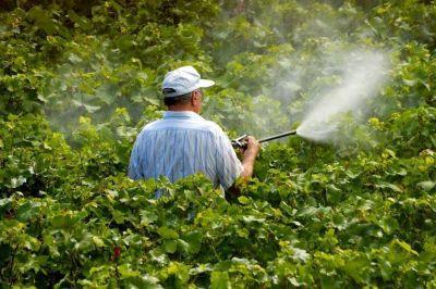 Alertan por la alta presencia de restos de agrotóxicos en frutas y hortalizas