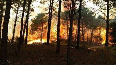 El Gobierno promulgó la ley que protege a los bosques nativos de los incendios