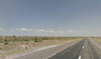 Terminaron de alambrar Ruta 20 para evitar el ingreso de animales a la calzada