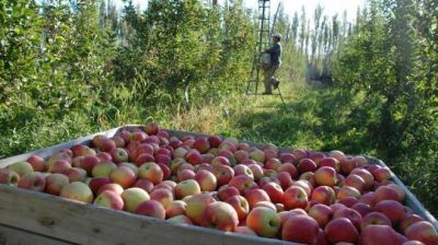 Fruticultura: los 540 millones ayudan, pero falta