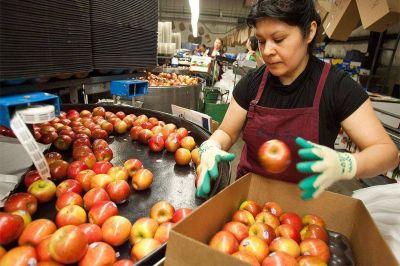 Las exportaciones frutihortícolas del primer trimestre cayeron 2,2% en dólares y 24,3% en volumen