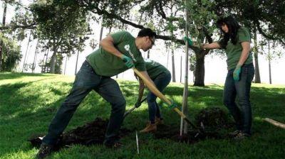 Lanzan una campaña para plantar un millón de árboles, en el Día Mundial del Ambiente