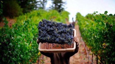 El sector vitivinícola enfrenta el peor momento de los últimos 20 años