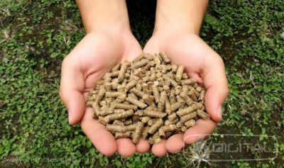 Obtendrán combustible a partir de desechos de la caña de azúcar