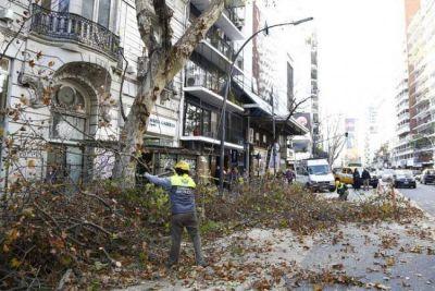 Piden a la Justicia que proteja el arbolado urbano
