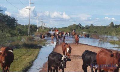 Casi seis mil productores declararon pérdidas y Nación ya avaló la emergencia agropecuaria
