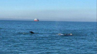 El show de las ballenas, cambios en el Gabinete y preocupación por amparos