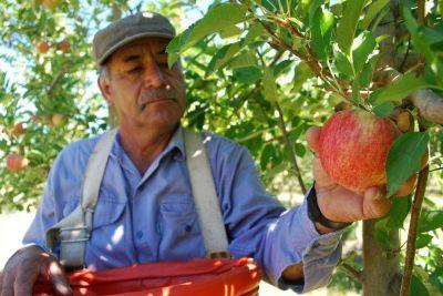 El Estado financiará programa de poda de peras y manzanas del Alto Valle