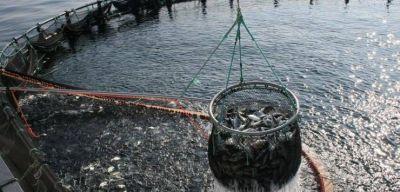 Entró en vigencia la ley que exime de impuestos a los productores de la actividad acuícola