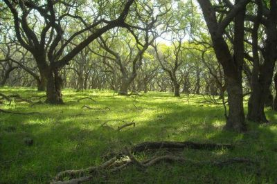 La Provincia reglamentó la ley que protege sus 969 mil hectáreas de bosques nativos