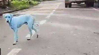 Bombay: varios perros se pusieron azules por un río contaminado