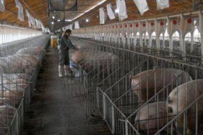 Gioja apuntó contra la importación de carne porcina