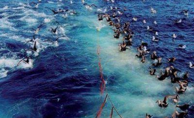 Áreas Marinas Protegidas, la iniciativa que crispó a la pesca nacional