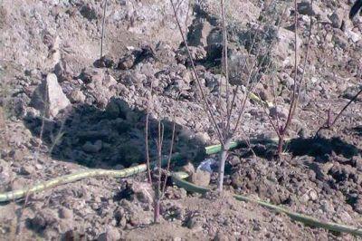 Buscan crear un pulmón verde en el vertedero municipal