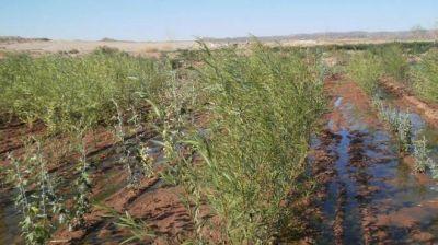 Biofiltros forestales para efluentes