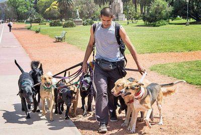 Crean el primer sindicato de paseadores de perros del país