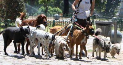 Made in Argentina: crean el sindicato de paseadores de perros