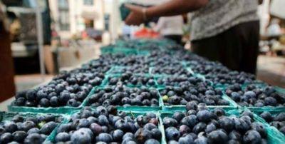 Especialistas de China visitaron Tucumán para acordar la exportación de arándanos