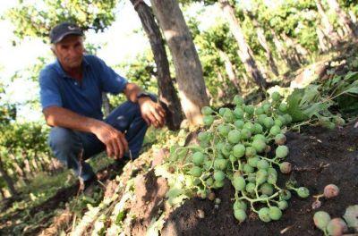 El INV no calculará la cosecha este mes y hay más críticas que apoyos