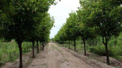 En 2017 se habrán plantado 20.000 árboles en la ciudad, según el municipio