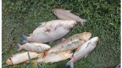 Investigan las causas de la mortandad de peces en el Luján