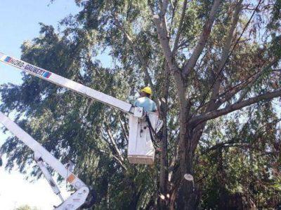 El Municipio despeja más luces y cámaras para reforzar la seguridad