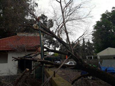 La lluvia inundó Monte Hermoso y el viento causó caída de árboles