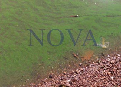 San Nicolás: algas tóxicas en el río Paraná ponen en alerta a vecinos
