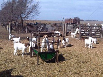 Entregaron más de $1 millón por las leyes ovina y caprina