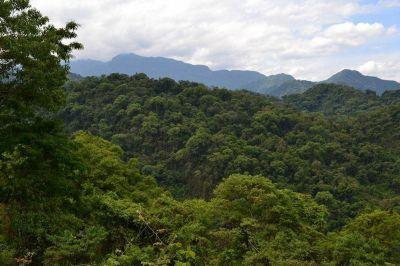 El Gobierno suspendió la ejecución de los cambios de uso de suelos en finca Cuchuy
