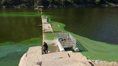 Provincia comenzó a remover las algas que se acumularon en el dique San Roque