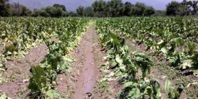 Trabajadores rurales de Salta piden auxilio tras perderlo todo