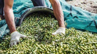 Peligran 10.000 puestos laborales de la industria olivícola catamarqueña